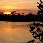 Werner - Boyce Salt Springs State Park - Port Richey, FL - Florida State Parks