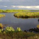Charlotte Harbor Preserve State Park - Punta Gorda, FL - Florida State Parks