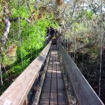Myakka River State Park - Sarasota, FL - Florida State Parks