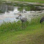 Clark Family Campground - Orange City, FL - RV Parks