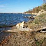Cardinal Campground - Shelbyville, IL - RV Parks