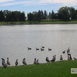 Rainbow Lake Manor - Bristol, WI - RV Parks