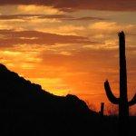 Desert Shadows / Western Horizons At Casa Grande - Casa Grande, AZ - RV Parks