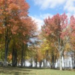Bay Shore Campground - Andover, OH - RV Parks