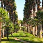 Victoria Palms RV Resort - Donna, TX - Encore Resorts