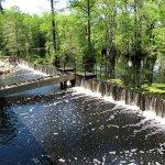 Merchants Millpond State Park - Gatesville, NC - North Carolina State Parks