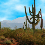 Desert Gardens RV Park - Florence, AZ - RV Parks