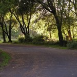Caswell Memorial State Park - Ripon, CA - California State Parks
