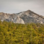 Idyllwild RV Resort -  Idyllwild , CA - Thousand Trails Resorts