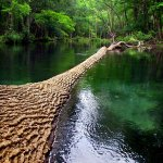 Ichetucknee Springs State Park - Fort White, FL - Florida State Parks