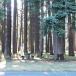 French Prairie Rest Area Southbound - Aurora, OR - Free Camping