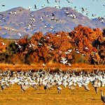 Bosque del Apache National Wildlife Refuge, NM - San Antonio, NM - Free Camping