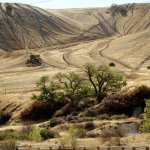 Carnegie State Vehicular Recreation Area - Tracy, CA - RV Parks