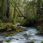 Humboldt Redwoods State Park - Weott, CA - California State Parks