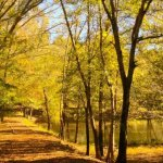 Musgrove Mill State Historic Site - Clinton, SC - RV Parks