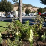 Novato RV Park - Novato, CA - RV Parks