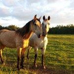 Clarcona Horse County Park  - Apopka, FL - County / City Parks