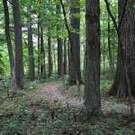 Beall Woods State Park - Mount Carmel, IL - Illinois State Parks