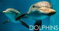 Clearwater Marine Aquarium - Clearwater Beach, FL - Attractions