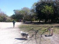 Enterprise Dog Park - Clearwater, FL - Professional
