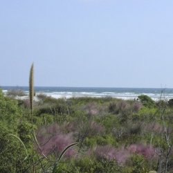Little Talbot Island State Park - Jacksonville, FL - Florida State Parks