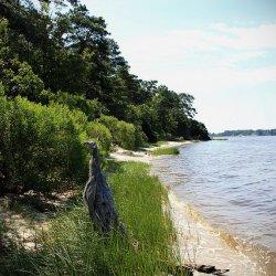 First Landing State Park - Virginia Beach, VA - Virginia State Parks