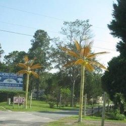 Dove Rest Rv & Mobile Home - Marianna, FL - RV Parks