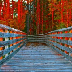 Tarkiln Bayou Preserve State Park - Pensacola, FL - Florida State Parks