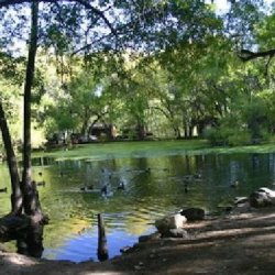 Lo Lo Mai Springs Resort - Cornville, AZ - RV Parks