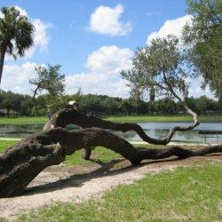 Happy Days RV Park - Zephyrhills, FL - RV Parks
