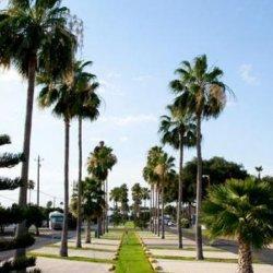 Alamo Palms RV Resort - Alamo, TX - Encore Resorts