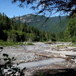 Silver Springs Campground - Enumclaw, WA - RV Parks