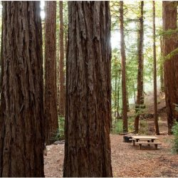 Ventana Campground - Big Sur, CA - RV Parks
