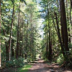 Portola Redwoods State Park - La Honda, CA - California State Parks