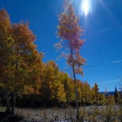 North Park / Gould / Walden KOA - Walden, CO - RV Parks