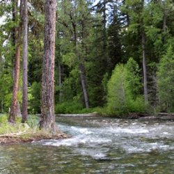 Teanaway Campground - Cle Elum, WA - Free Camping