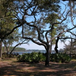 Ochlockonee River State Park - Sopchoppy, FL - Florida State Parks