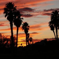 Lake Tamarisk Desert Resort - Desert Center, CA - RV Parks
