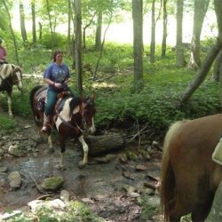 Lazy D Campground & Trail Rides - Altura, MN - RV Parks