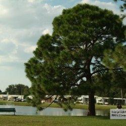 Whispering Pines - Largo - Largo, FL - RV Parks