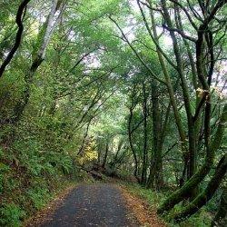 Samuel P. Taylor State Park - Lagunitas, CA - California State Parks