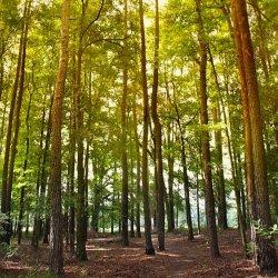 San Felasco Hammock Preserve State Park - Alachua, FL - Florida State Parks