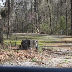 Broad River Campground - Tignall, GA - RV Parks