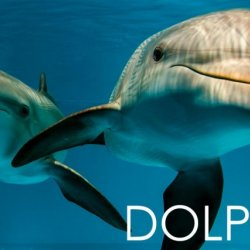 Clearwater Marine Aquarium - Clearwater Beach, FL - Attractions