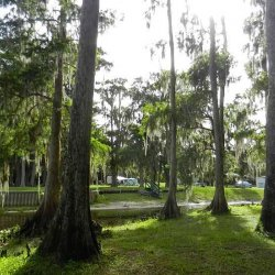 Lake Arbuckle Park Campground - Frostproof, FL - County / City Parks