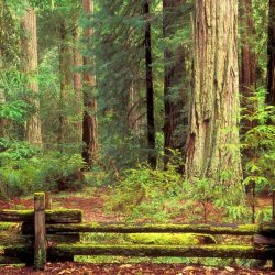Big Basin Redwoods State Park - Boulder Creek, CA - California State Parks