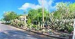 Oleander Acres Resort - Mission, TX - RV Parks