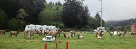 Elk Country RV Resort & Campground