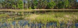 Carolina Beach State Park - ,  - North Carolina State Parks