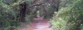 Camp Helen State Park - ,  - Florida State Parks